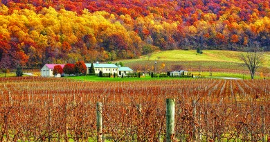 Breaux Vineyards, picutured, is one of 40 wineries in Loudoun County. [Tom Lussier/Visit Loudoun]
