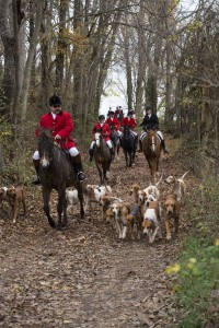 UNITED STATES - November 11, 2015 : Loudoun Hunt started in 1894 and is 121 years old this year. Its by far the oldest organized hunt in Loudoun County. (Photo By Douglas Graham/Loudoun Now)