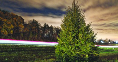 Cars zoom past the new Leesburg Route 7 Christmas tree heading East. The tree now sits on the East bound off ramp of Route 7 and Market Street. Construction crews unceremoniously removed the old tree that had been decorated for the past 40 years in the median as part of the highway widening project now underway. (Photo by Douglas Graham/Loudoun Now)