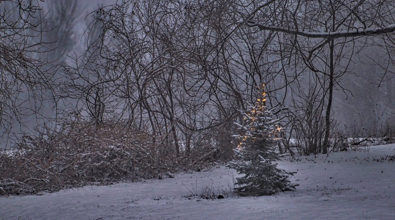 A Christmas tree still has the light burning in the village of Bluemont.    (Photo by Douglas Graham/Loudoun Now)