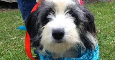 Lulu is one of the rescued pups now available for adoption at the Humane Society of Loudoun County.