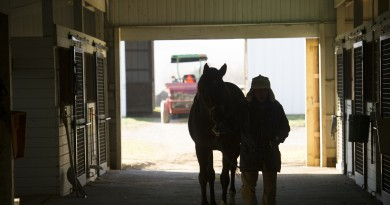 Groom Petronilo Ramirez walks a horse into the barn for dental appointments at Goshen Farm.  (Photo by Douglas Graham/Loudoun Now)