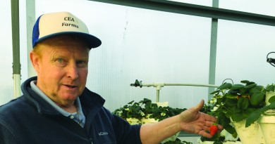 Donald Virts holds a ripening strawberry in his 5,000-square-foot hydroponic greenhouse near Hillsboro.