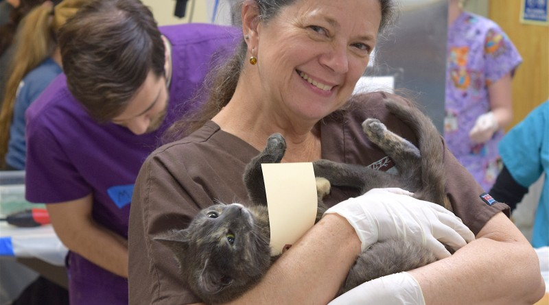 A patient gets a little extra TLC during the March 6 Trap Neuter Release Clinic in Leesburg.