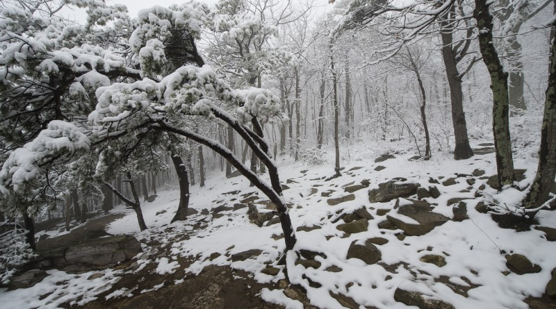 A storm on the first day of spring left about an inch of wet snow in the Blue Ridge mountains at Bears Den. (Photo by Douglas Graham/Loudoun Now)