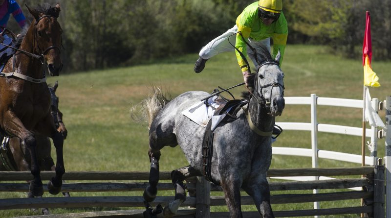Sean McDermott fights to stay on this mount during the novice timber race during the 50th Annual Loudoun Hunt Point to Point Races on Sunday, April 17, 2016  (Photo by Douglas Graham/Loudoun Now)