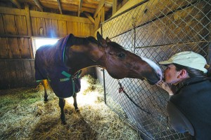 "Eva Smithwick gets a kiss from her horse ""Rutledge"". Smithwick is the owner of Sunny Bank Farm the horse farm near Middleburg. (Photo by Douglas Graham/Loudoun Now)"