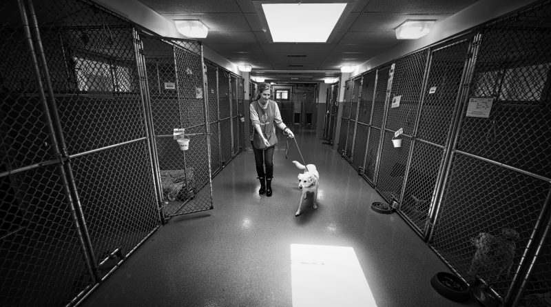 """Kathleen Brown a volunteer with Loudoun County Animal Shelter walks """"codices"""" back to her cage at the shelter.  (Photo by Douglas Graham/Loudoun Now)"""