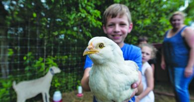 Ten-year-old Collin Overstreet enjoys playing with the chickens at Willowsford Farm Stand in Ashburn. [Douglas Graham/Loudoun Now]