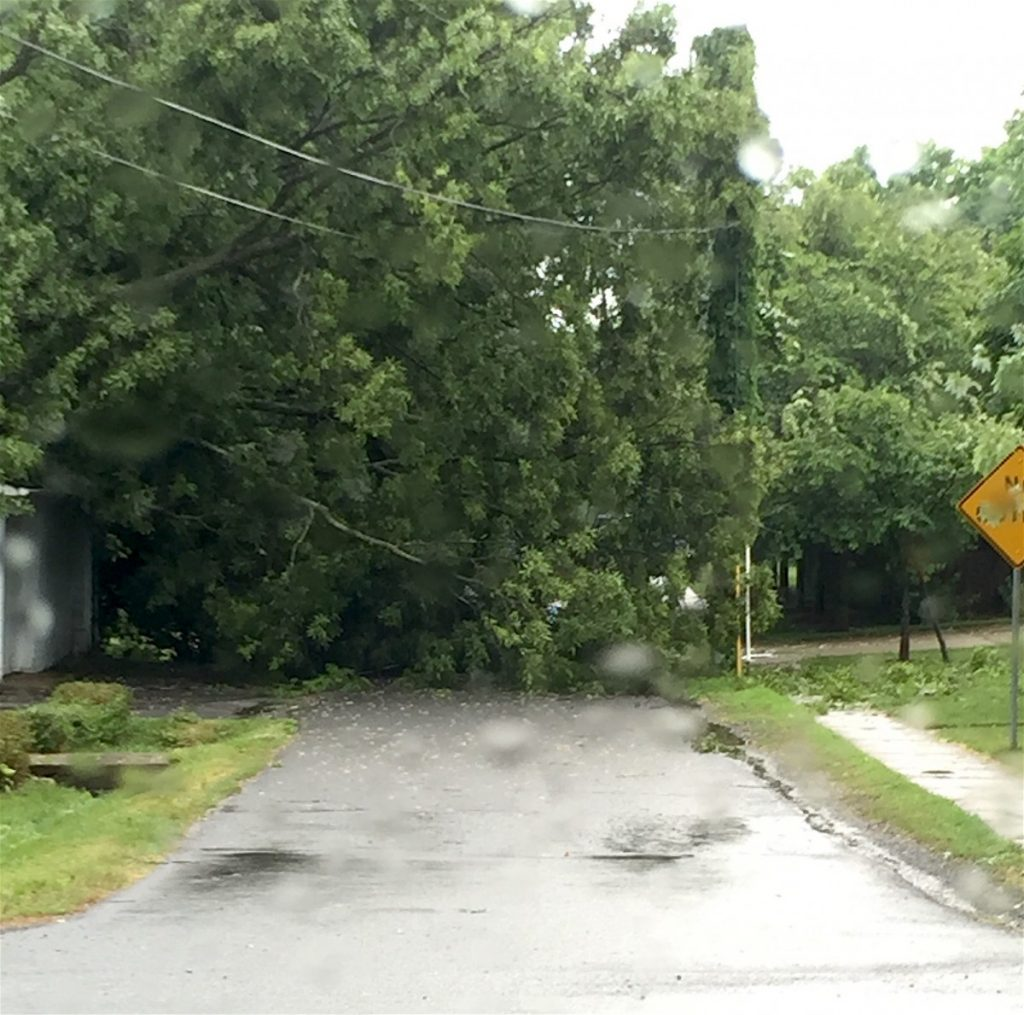 A large tree fell across South Locust Street in Round Hill during Thursday's storm.