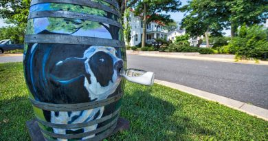 Decorative oak barrels have been painted and placed around the town of Purcellville.  (Photo by Douglas Graham/Loudoun Now)