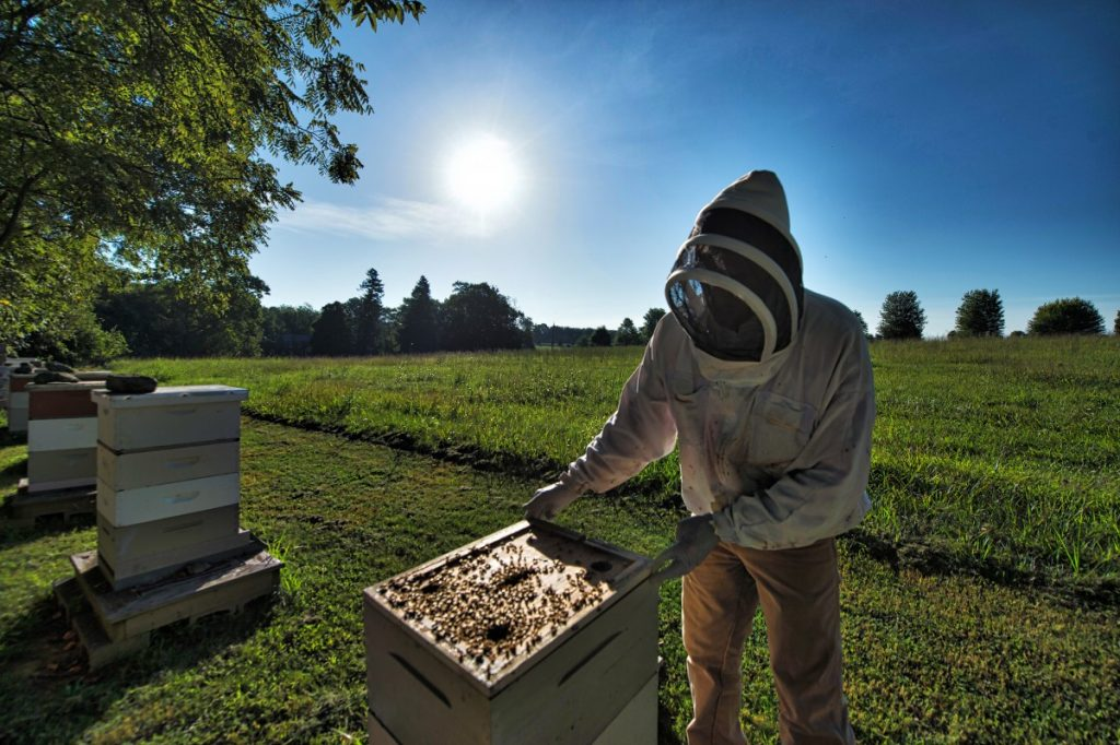 Matt Gaillardetz spends much time and energy at his bee yard to maintain a healthy colony. [Douglas Graham/Loudoun Now]