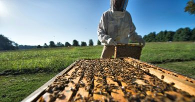Beekeeper Matt Gaillardetz tends his bee colonies in Lovettsville. He is among local bee hobbyists who have seen some success in preventing bee colony loses. [Douglas Graham/Loudoun Now]