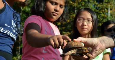 Fifth-grader Ananya greets a box turtle, an example of the type of native animal she and her classmates are trying to welcome back to the school grounds. [Danielle Nadler/Loudoun Now]