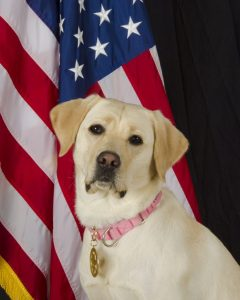 The Loudoun County Fire Marshal's explosive detection canine, Aurora. (Loudoun County Fire Marshal's Office)