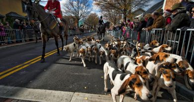 The Middleburg Hunt makes its way down Washington Street during the annual Christmas in Middleburg event. [Douglas Graham/Loudoun Now]