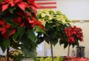 Friday Last Day to Visit Monroe Tech Winter Plant Sale