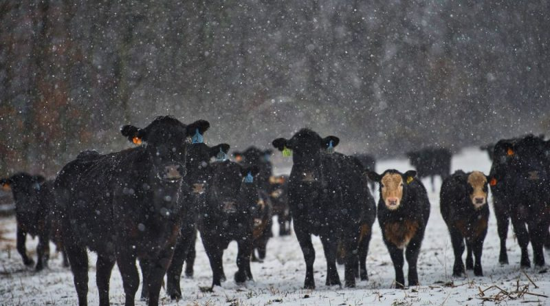 Welcome to Spring: Storm Could Bring a Foot of Snow