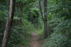 A hiking trail around Beaverdam Reservoir in Ashburn. [Renss Greene/Loudoun Now]