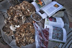 Dave Carmichael gathers oak tree acorns, hen-of-the-woods mushrooms and silverberry that he harvested growing less than 200 yards from his home near Lovettsville. [Douglas Graham/Loudoun Now]