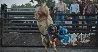 PHOTO GALLERY: A Livestock Auction and Bucking Bulls at the Fair